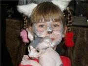 Продаются котята породы Канадский сфинкс шоу класса